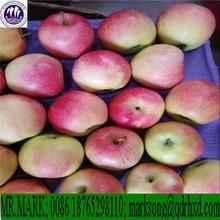 apple fruit fresh, bulk fruit apple, fruit market prices apple