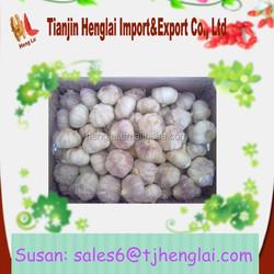 red garlic distributor wholesale 2015 fresh china garlic