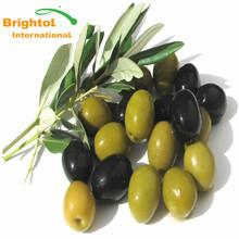High quality Olive fruit powder