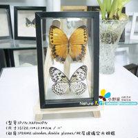 """FOUSEN(043 Random Species) Nature&Art 8"""" (double glasses) framed butterfly"""