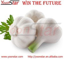 2015 New Fresh China Garlic for Sale with Good Quality