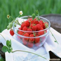 100% natural Fruit Flavour Instant Drink Powder , sugar free fruit flavor powder