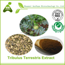 Tribulus Terrestris Extract Saponins 40% , 45% in Bulk For Male Function