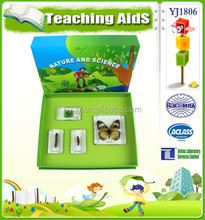Embedded specimen life cycle of butterfly educational toys for kids