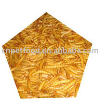 FD/AD/SD mealworm bird/ pond fish/reptile food feed