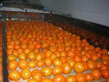 fresh mandarien
