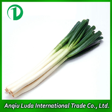 fresh welsh onion