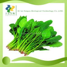 China manufacturer supply bulk organic Spinach,Spinach powder 5%, 10%, 90%, 95% Beta Ecdysterone