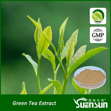 GMP factory 100% natural green tea extract tea polyphenol