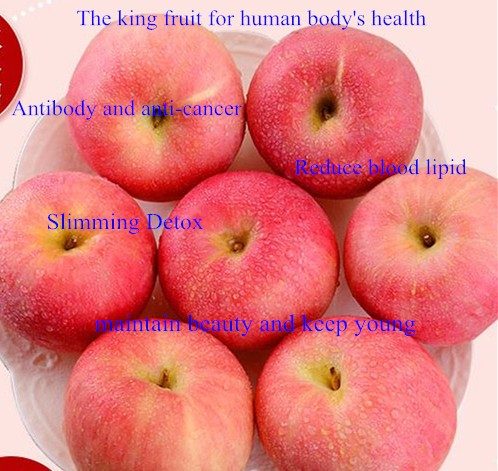 apple 12_.jpg