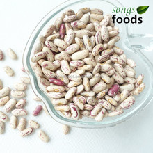Types of High Quality Light Speckled Kidney Beans Long Shape