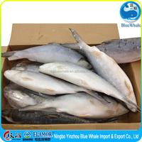 Frozen fish Seafood milkfish Excellent freshness Protein-rich