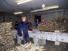 Best Dried Stockfish Cod,Saithe,Cod Fish, Head - Stockfish