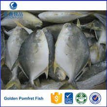Frozen Whole Round Bulk Golden Pomfret Fish