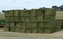 Premium Cattle Feed Alfalfa Hay for Sale