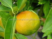 BV certificated manufacturer supply high quality best price Grapefruit Seed Extract