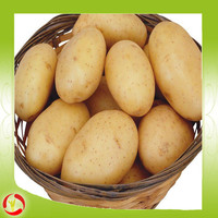 2015 hot sale fresh potato with low price