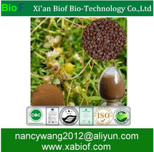 Herbal Medicine Dodder seed extract 100% Natural Semen Cuscutae Extract 4:1 10:1 Water Soluble