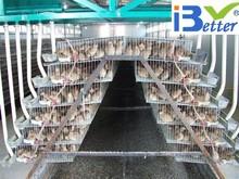 Bt fábrica caliente- venta de alta calidad de la capa de codorniz jaulas para la venta en la granja de aves de corral