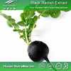 Natural Black Radish Extract Powder 4:1~20:1