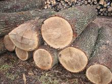 Round oak logs
