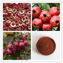 100% Factory sale Hawthorn Leaf Extract , Hawthorn Fruit Leaf Extract