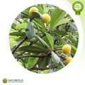 nuevos productos calientes 2014 para las hojas de níspero extracto de ácido ursólico