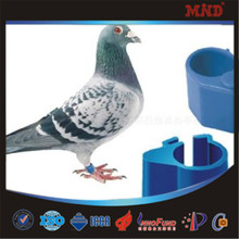 Mdr11 2015 dinámica bélgica racing etiqueta anillo de paloma paloma banda producto