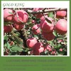 Red Mature Wholesale Prices Apple Fruit from China