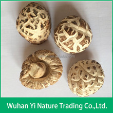 China Dried Shiitake Mushrooms Cultivation