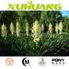 honghao 100% natural saponins 40% 60% yucca extract powder Yucca Extract Powder