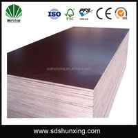 1220*2440mm poplar main material and plywood type commercial plywood