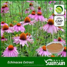 GMP factory supply echinacea purpurea extract
