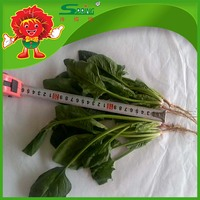Fresh vegetable freezed natural green frozen spinach leaves