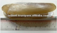 Seafood Frozen Razor Clam For Sale