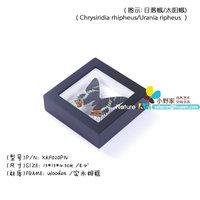 FOUSEN(020 Mounting Service ) 15*15*4.5cm Black Wood Framed Naturals Decoration
