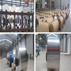 Factory price Container Aluminium Foil, for food packing 3003
