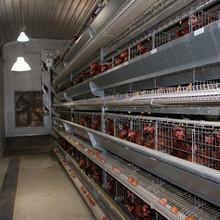 Hot Galvanized Professional Layer Chicken Breed Equipment