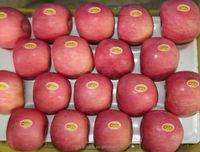 Iranian Fresh Apple from Yantai China