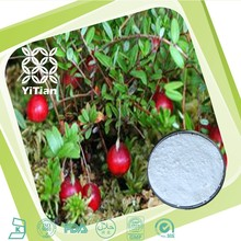 Pure Bearberry Leaf Extract