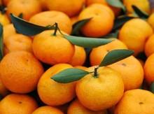 nanfeng fresh mandarin oranges