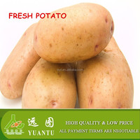 best fresh Holland potato chinese picked vegetables