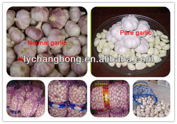 2014 Japanese Garlic For Sale