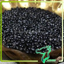Dried Heilongjiang Original Black Kidney Bean For Soup/ Black Kidney Bean Wholesales Size/100g 440-460