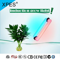 XPES 300W LVD Grow Light rectangular LVD Grow Greenhouse Hydroponic rectangular Vegetables