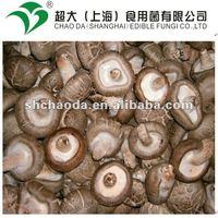 new production fresh shiitake mushroom