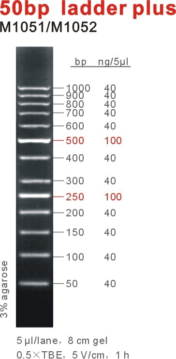 50bp ladder plus