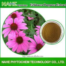 2015 China New Product Herb Medicine 100% Natural Echinacea Purpurea Extract In Bulk