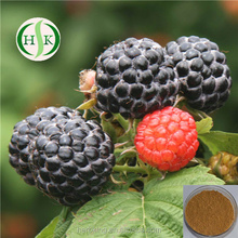 Natural Plant Raspberry Extract Powder Rubus idaeus Extract