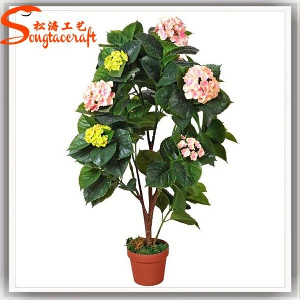 Piante da appartamento fiori e piante fiore pianta nomi for Piante da appartamento nomi